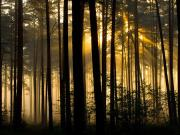 Leszek Wygachiewicz - Świt w lesie - II miejsce w kategorii Krajobraz