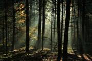 II nagroda – Remigiusz Gmyz - Świetlisty las