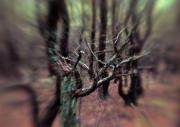 Zestawy (ZE) – III miejsce – Bogdan Brydak: Czołpiński las
